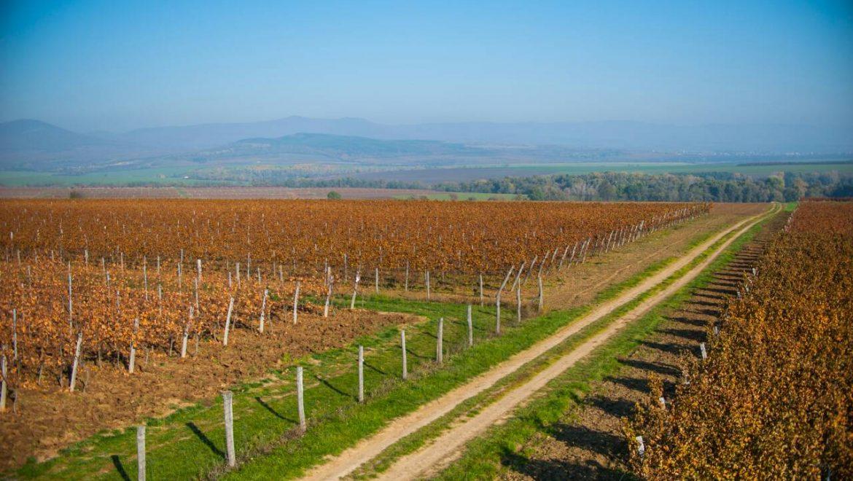 Vinohradnícka oblasť Mátra