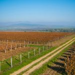 Vinohradnícky región Mátra